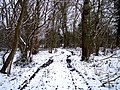 Mayalls Coppice in Mid March Snow - geograph.org.uk - 136518.jpg