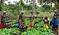 Maza Wanawake Kwanza Growers Association (7269688488).jpg