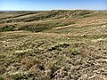 McCone grasslands.jpg
