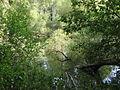 Medobory Nature Reserve (16).JPG