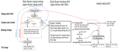 Menstrual cycle diagram vi.png