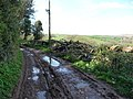 Mid Devon , Muddy Countryside Track - geograph.org.uk - 1253419.jpg