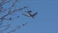 Military aircraft landing at Tulsa International.png
