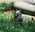 Mockingbird Feeding Chick004.jpg