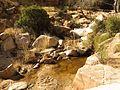 Molino Creek - Flickr - treegrow (1).jpg