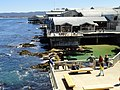 Monterey Bay Aquarium - DSC07002.JPG