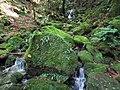 Moss-Covered Rocks (32190383762).jpg