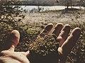 Moss under the sun.jpg