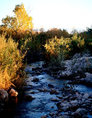 Muddy River (Nevada) - Muddy River in late Fall, looking south