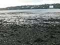 Mudflats, Menai Strait - geograph.org.uk - 667780.jpg