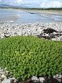 Murvagh Beach from Mullanacross - geograph.org.uk - 922434.jpg