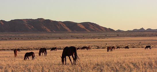 Namib desert feral horses.jpg