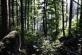 National natural monument Polické stěny in summer 2016.JPG