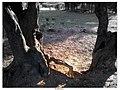 Naturareza - panoramio.jpg