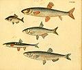 Naturgeschichte in Bildern mit erläuterndem Text (Taf. CXXXIX) (6059230744).jpg