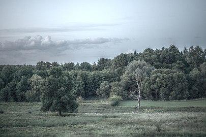 Naturschutzgebiet Indetal.jpg