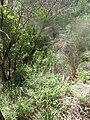 Nesher, Park Nesher, Wadi Katia 010.JPG