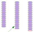Nitrogen131415.PNG