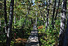 North Country National Scenic Trail.jpg