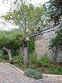 Notre-Dame de Sion IMG 0827.JPG