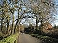 Oaks and houses, Smiths Lane - geograph.org.uk - 2232815.jpg