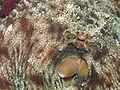 Octopusv.JPG