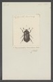 Oryctomorphus - Print - Iconographia Zoologica - Special Collections University of Amsterdam - UBAINV0274 021 06 02 0010.tif