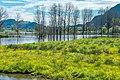 Ossiach Alt-Ossiach Bleistätter Moor Wasserflächen Baumreihen Sumpfwiesen 23052019 7029.jpg