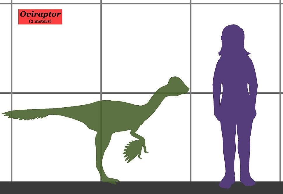 Oviraptor size