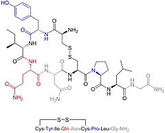 Oxytocin structure. Inset shows oxytocin bound to neurophysin