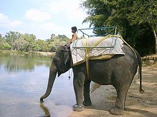 320px-P10100441 dans ELEPHANT