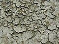 P1010179b - Schiermonnikoog Strandvlakte 2009 - Krimpscheuren met zoutkristallen.jpg