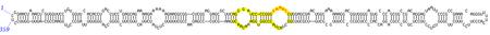 Structure du virus PSTV.