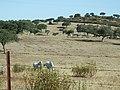 Paisaje de la Provincia de Cáceres 47.jpg