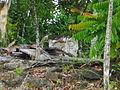 Palauan Stone Face in Aimeliik.JPG