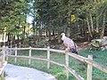 Parc animalier Aran Park de Bossòst 06.jpg
