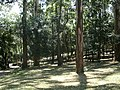 Parque Guarapiranga - Av. Guarapiranga 505 (9) - panoramio.jpg