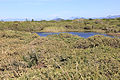 Parque Nacional da Restinga de Jurubatiba 31.jpg