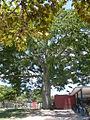 Parque del Este 2012 007.JPG