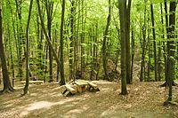 Path in the Yavoriv National Park.JPG