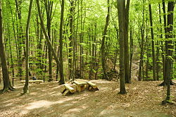 Path in the Yavoriv National Park.JPG