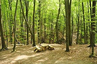Yavorivskyi National Park - Image: Path in the Yavoriv National Park