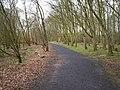 Path to Kinnegoe Bay Bird Hide - geograph.org.uk - 748122.jpg