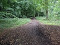 Pavis Wood - geograph.org.uk - 576002.jpg