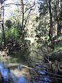 Peel-River-trees.jpg