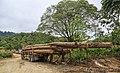 Pensiangan Sabah Logging-trucks-01.jpg