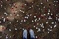 Petali.scarpe.jpg