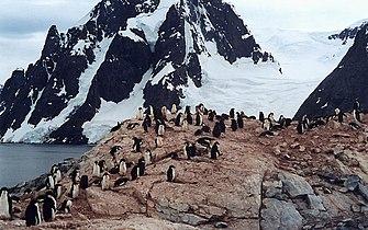 Petermann Island Adelies.jpg