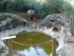 Pia do Urso.jpg