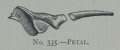Picture Natural History - No 335 - Petal.png